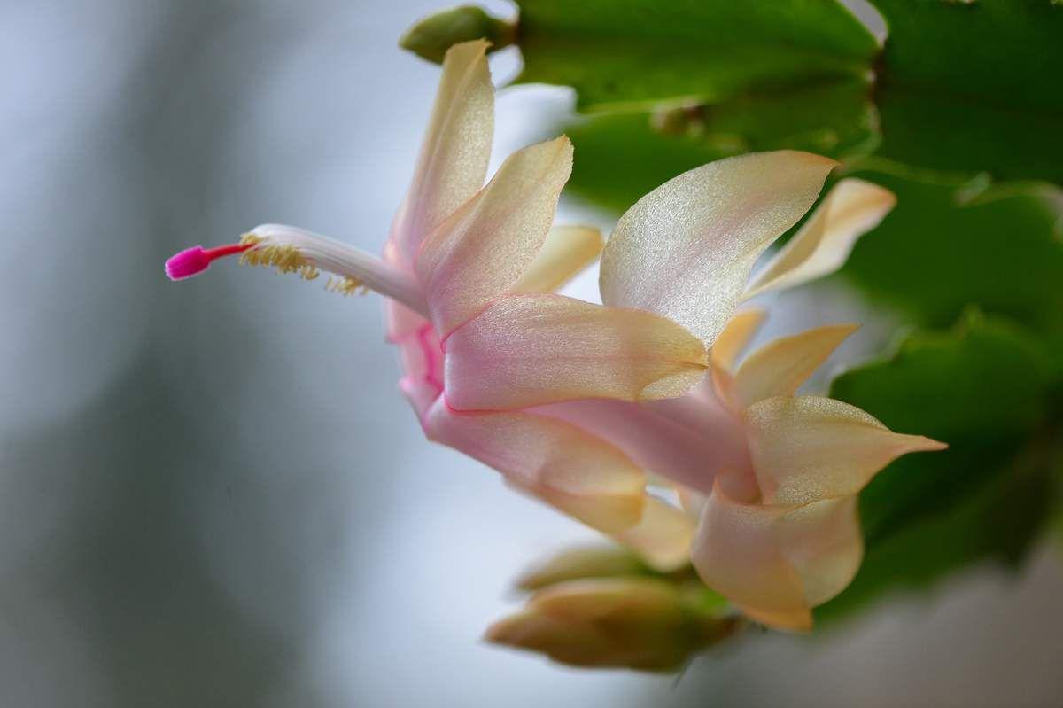 Quelques belles fleurs ...