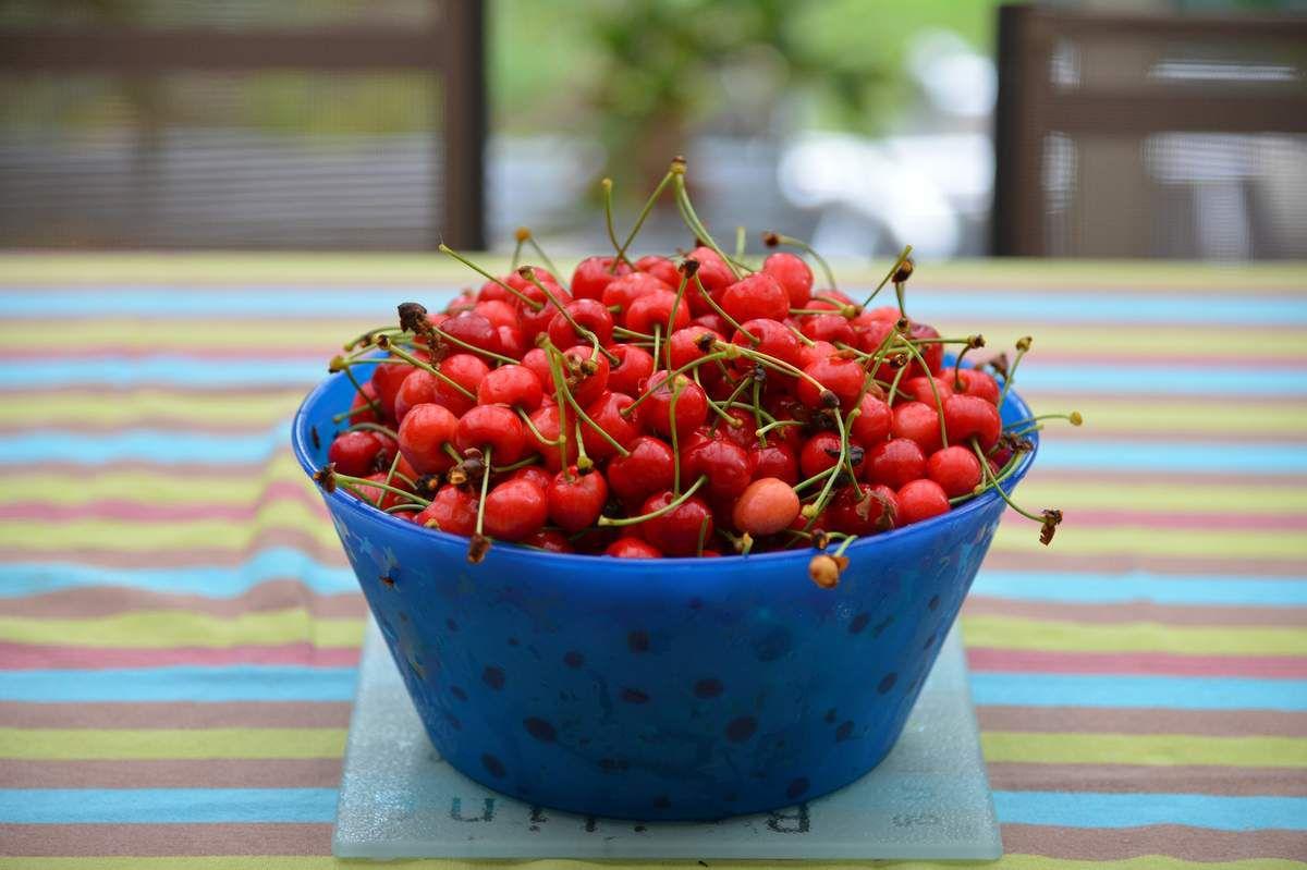 Les premiers fruits rouges ...