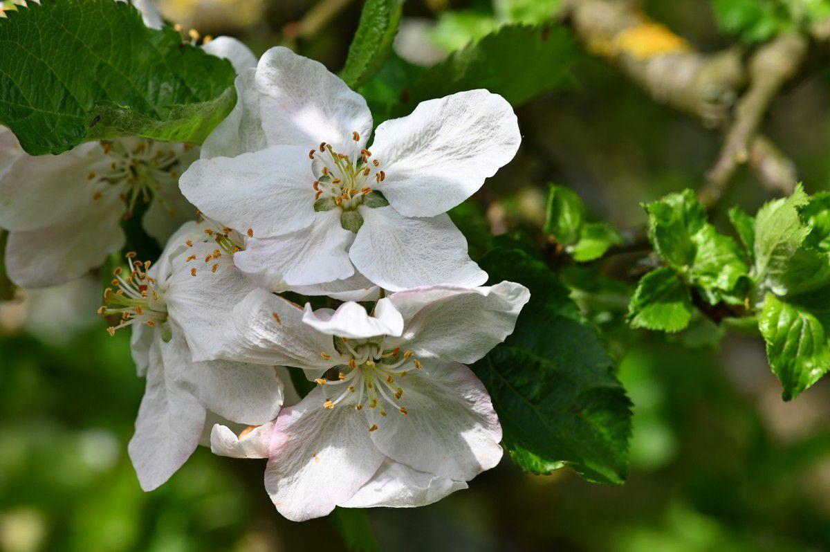 Et maintenant , des fleurs blanches ...