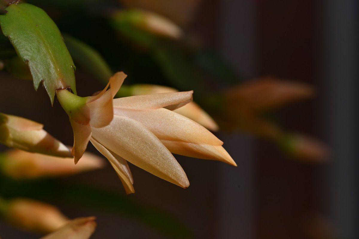 Quelques fleurs dans la véranda ...