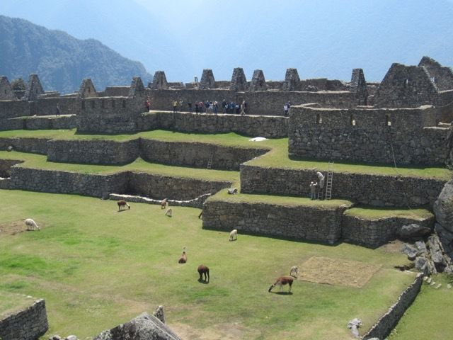 la place centrale de la cité, ou des lamas paissent en liberté a l'abri des hordes de touristes