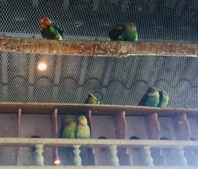 les lovebirds de l'hotel