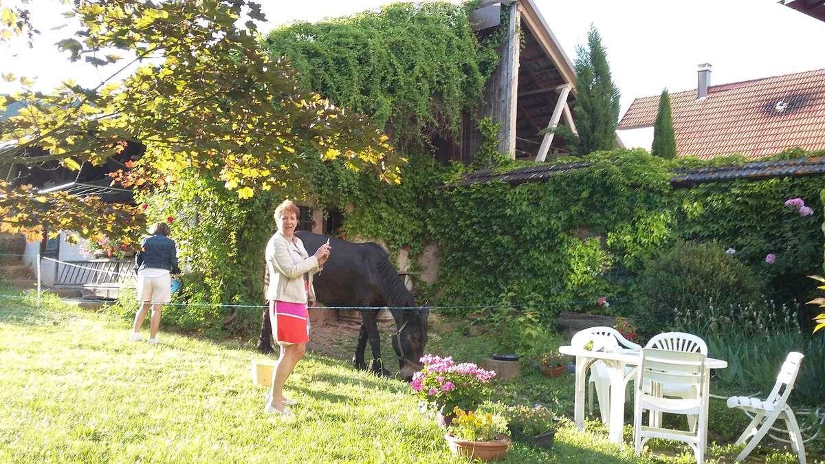 mulet dans un jardin