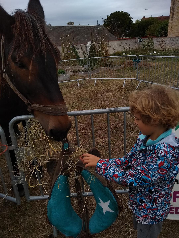 Le mulet et l'enfant