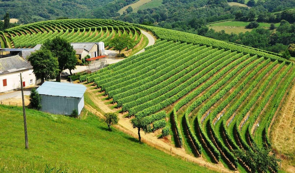 Vignes de Saint Mont