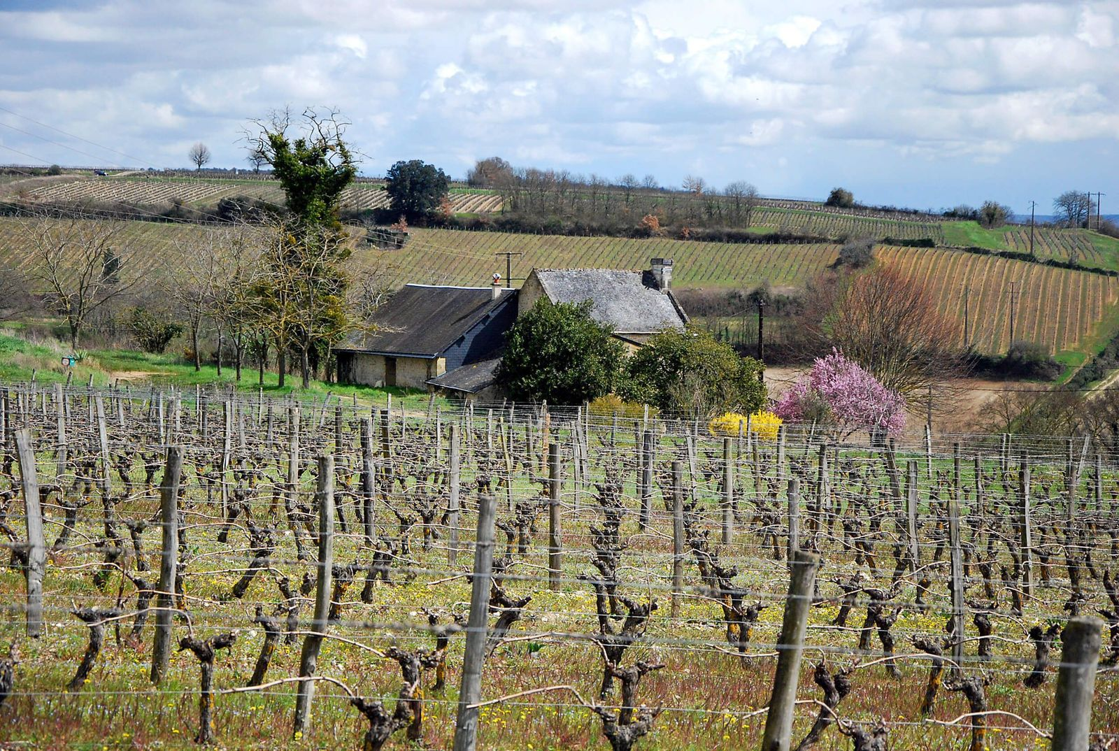 Domaine  Baudry Clos Guillot