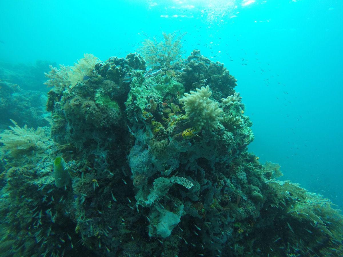 Plongée dans l'archipel de Semporna