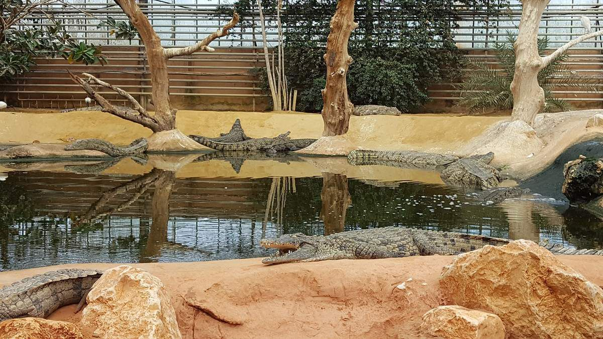 ferme_aux_crocodiles_pierrelatte_drome