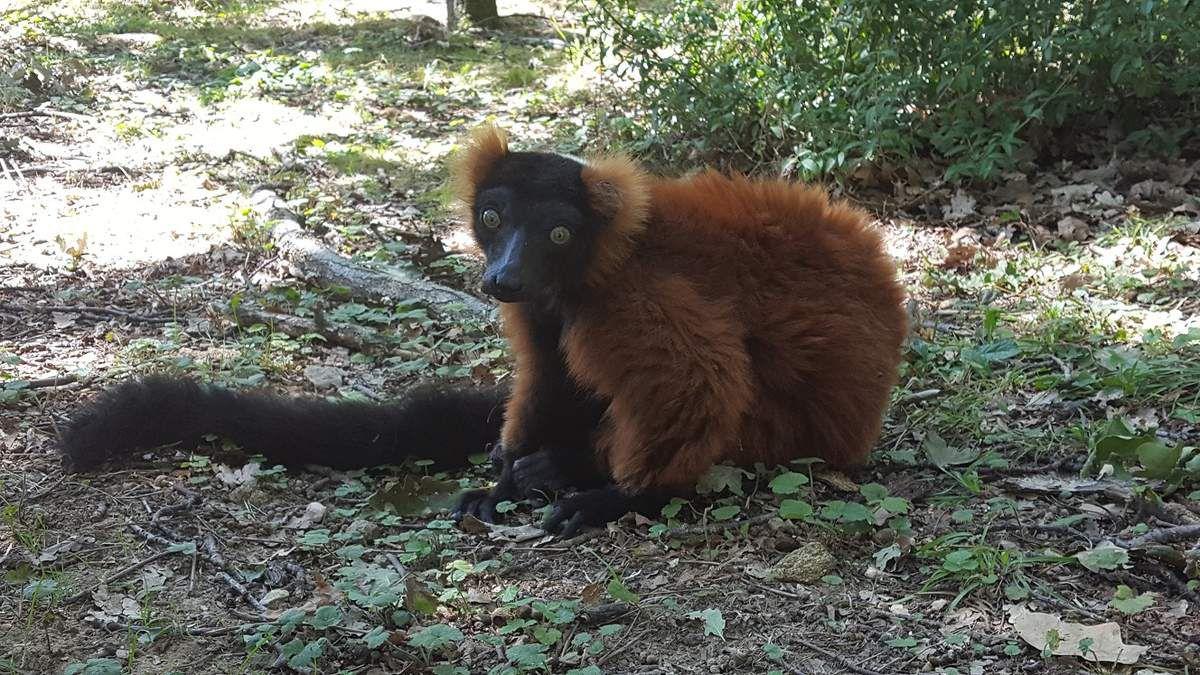 safari_de_peaugres_avis_blog