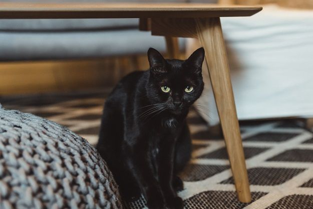 le chat noir de la famille en photo
