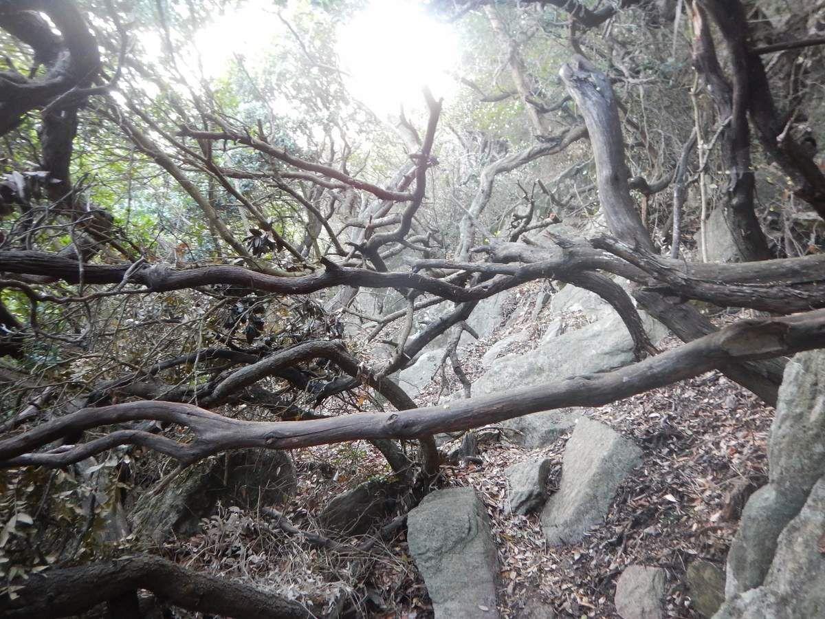 Du bois dans la Réserve naturelle des Arbousiers
