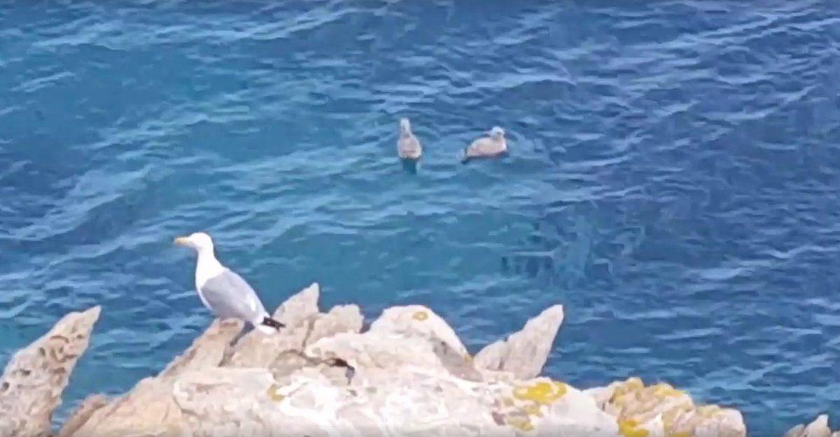 Une photo extraite d'une vidéo de Jan Van de Pol
