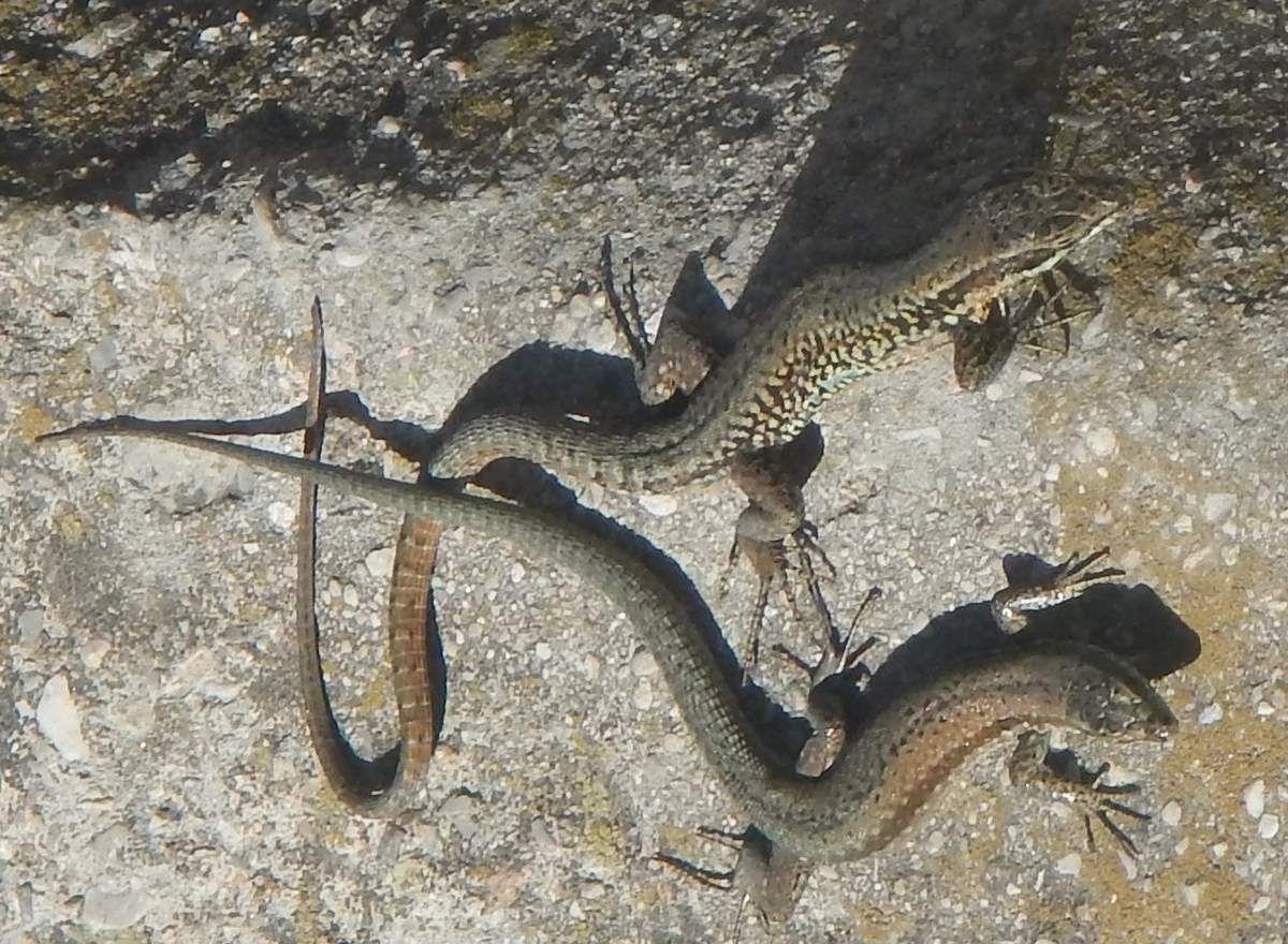 Femelle et mâle