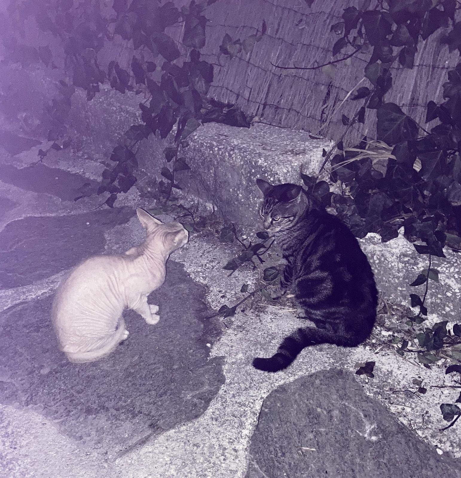 Tico et le chat du boulanger