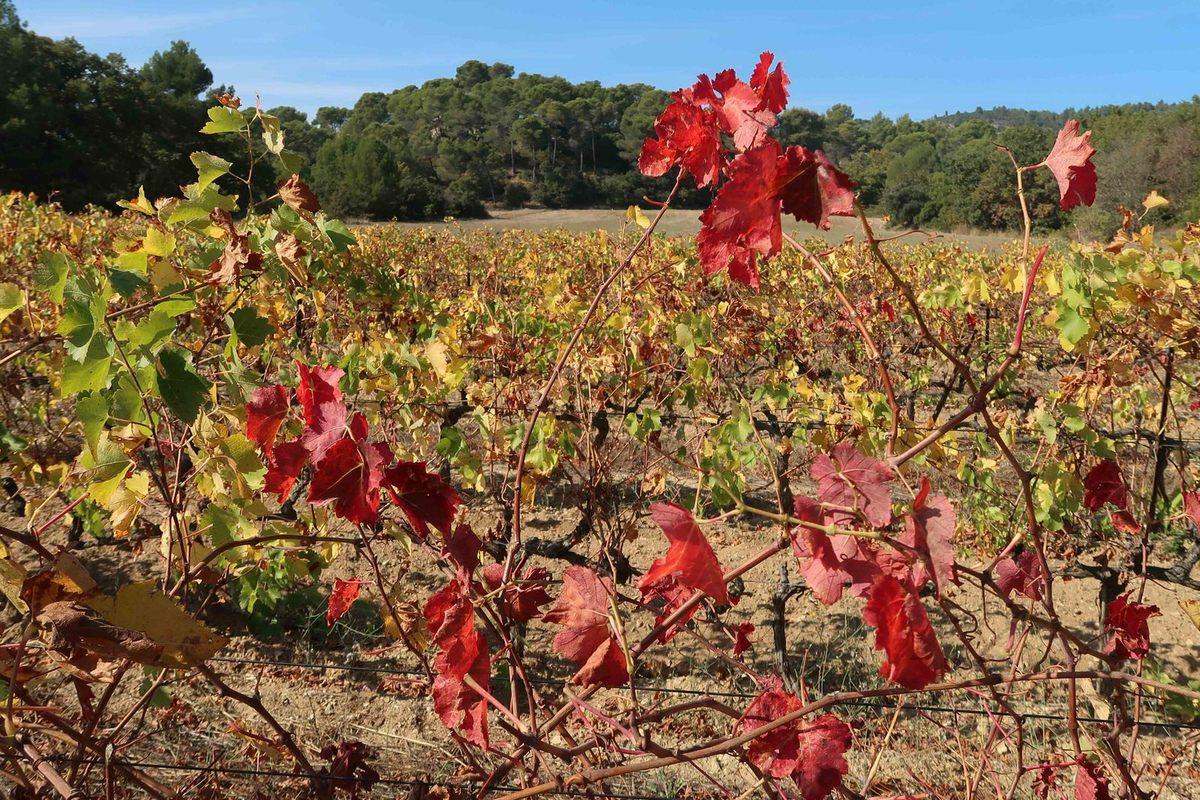 Journée très agréable , même si nous n'avons pas vu les vignerons !!!