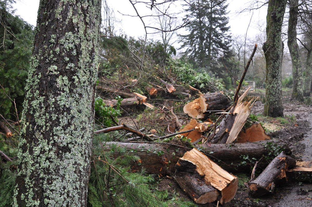 Une centaine d'arbres vont être abattus