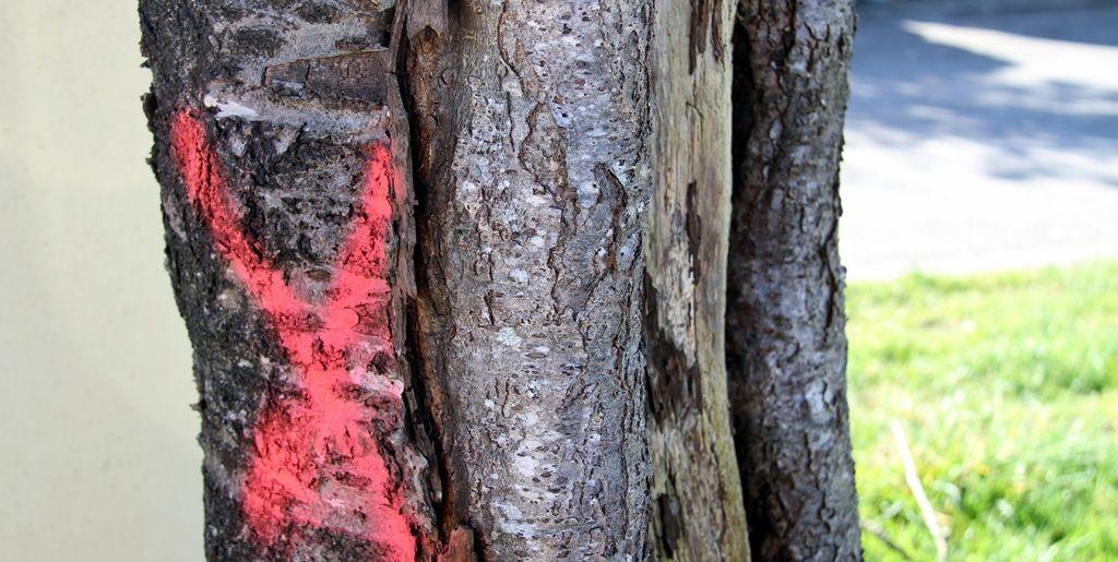 Après l'abattage des arbres bd de Provence, réaction de lecteur