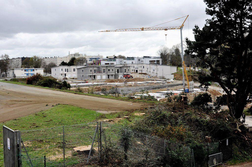 Abattage des cyprès du lycée de Cornouaille