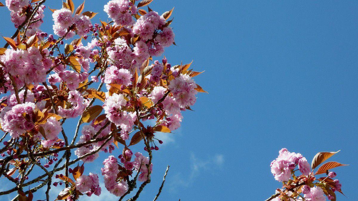 Nuages de fleurs rue de l'Île de Man