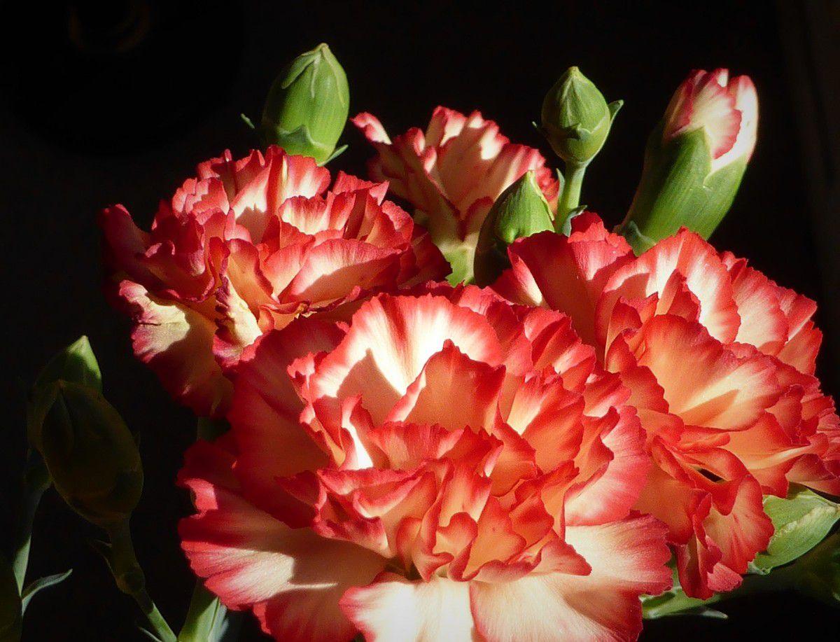 Dans un vase, en plein soleil, derrière la baie vitrée
