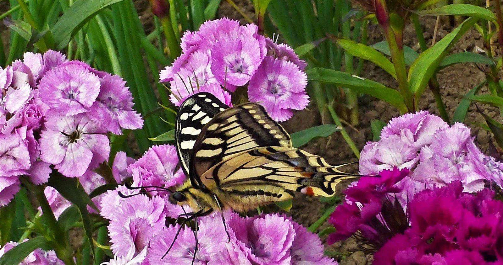 Archive Penhars Infos 2015 au jardin du Melgven