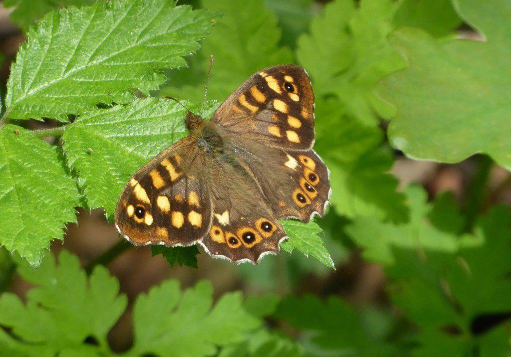 La rencontre du jour : un papillon ...