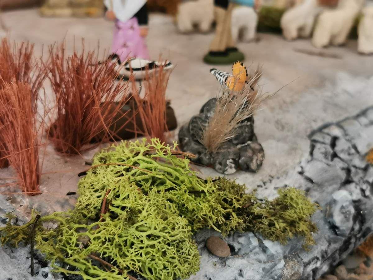 Une avocette élégante cherche des crustacés pendant qu'une huppe fascié  se repose sur un rocher