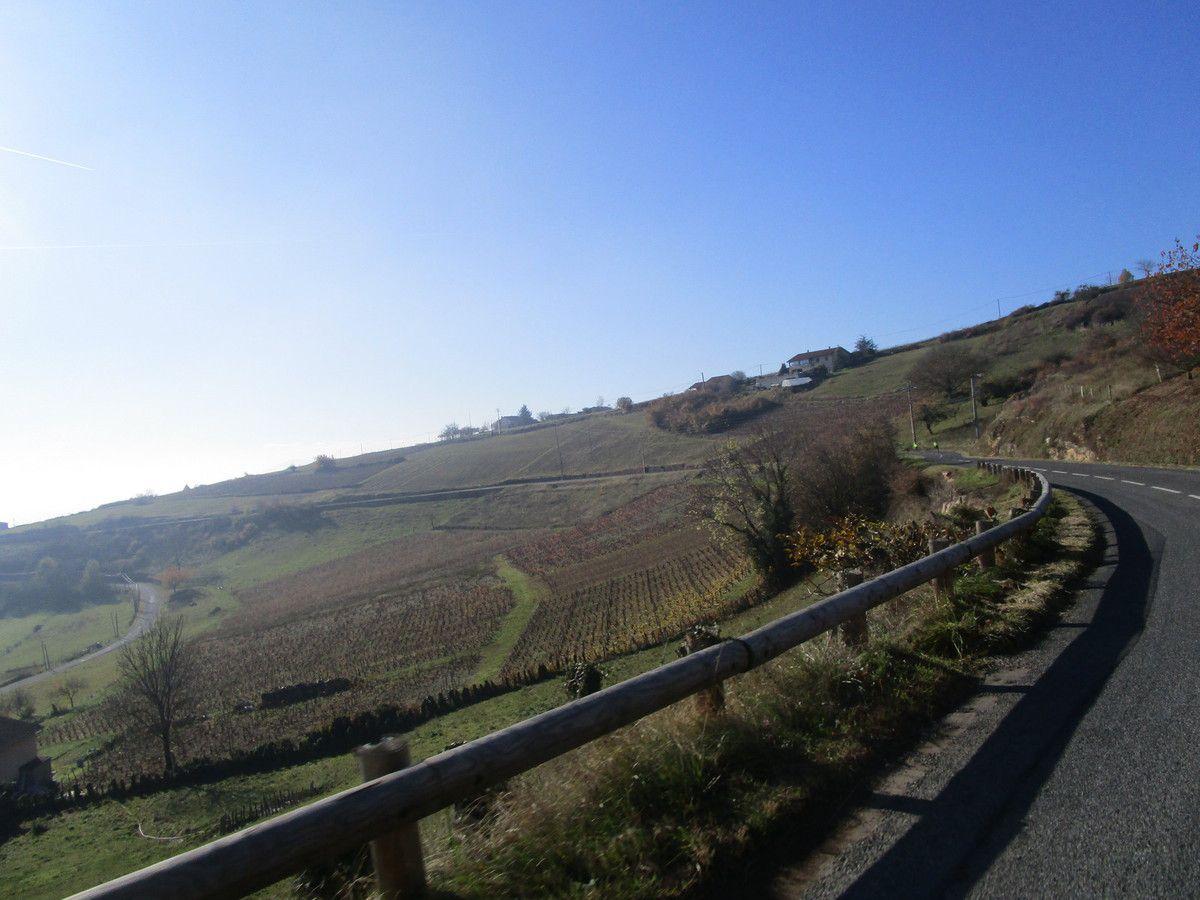 Dommartin vers Beaujolais   Promeneurs  Vendredi 17 novembre 2017