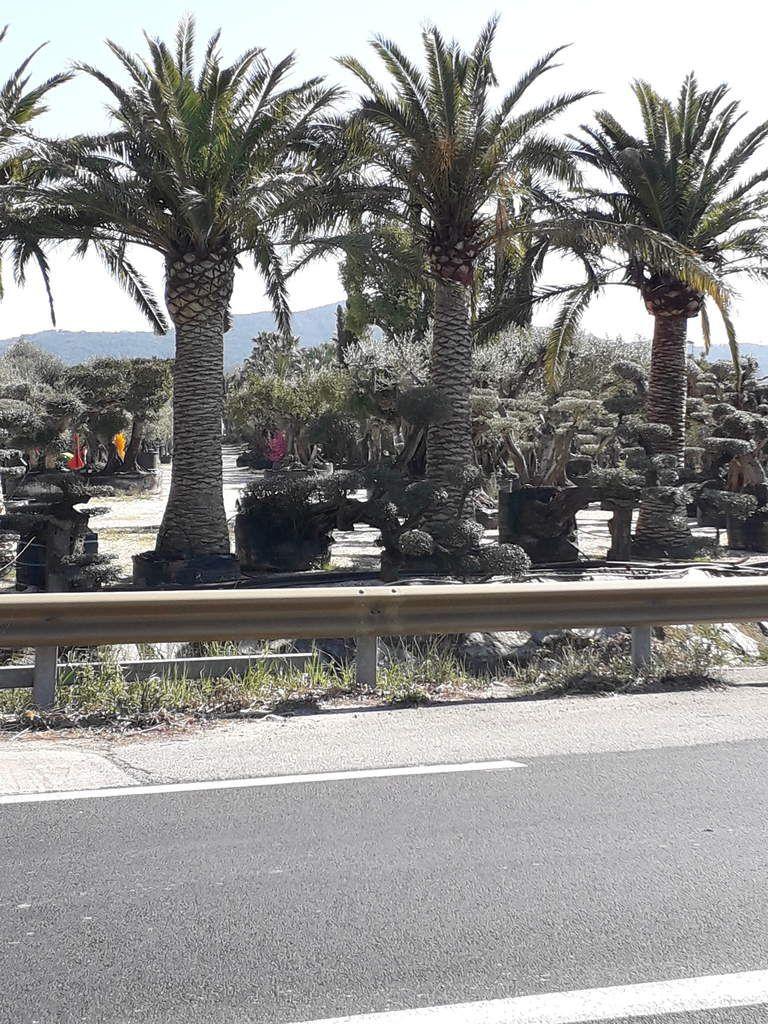 Séjour à Hyères >>> St Tropez (suite)-------- Jeudi 21 mars 2019
