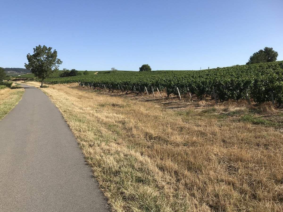 Charnay (71) - VTC Voie Verte - Lundi 29 juillet 2019