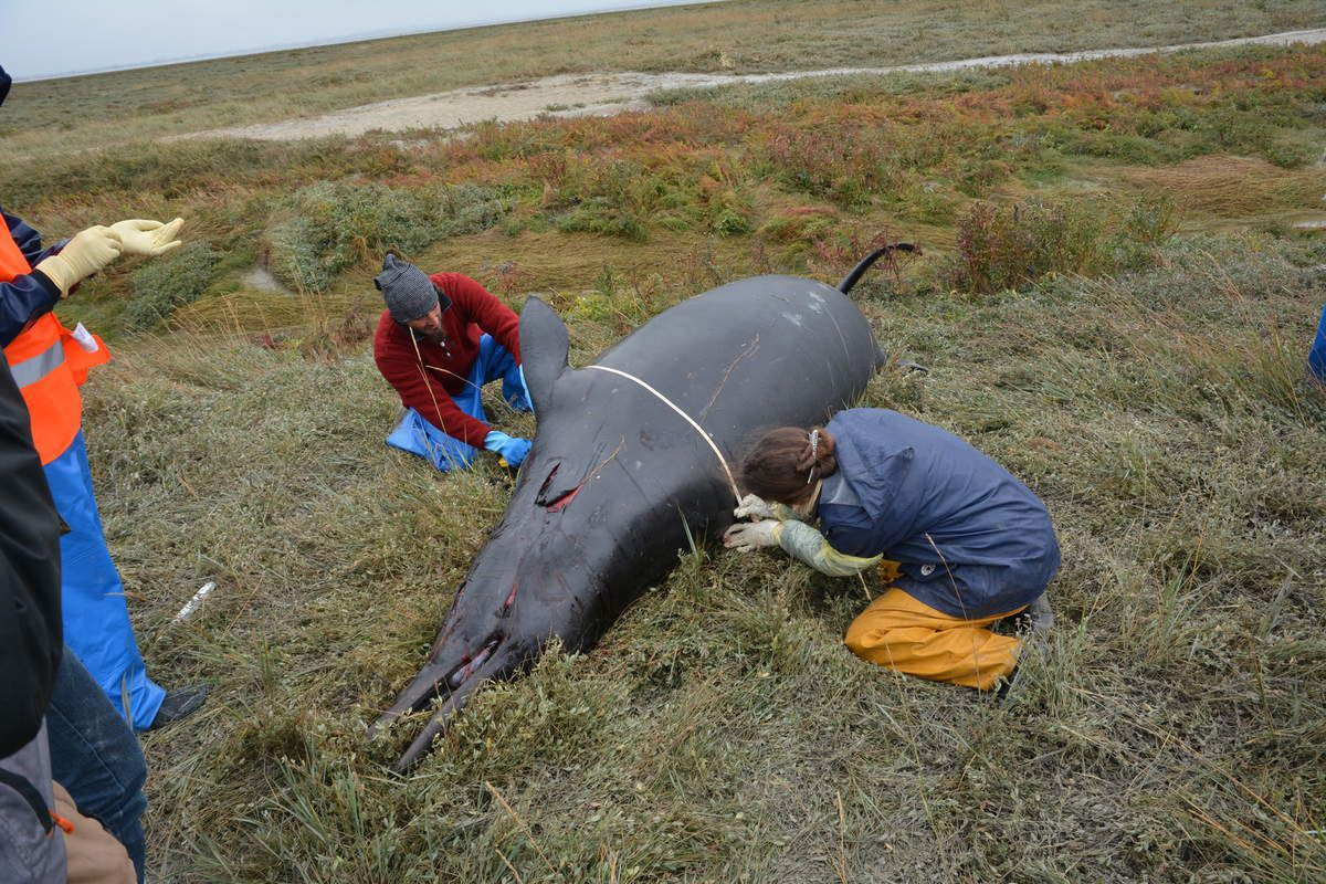 Photo credit © Audrey Hemon and other members of National Stranding Network