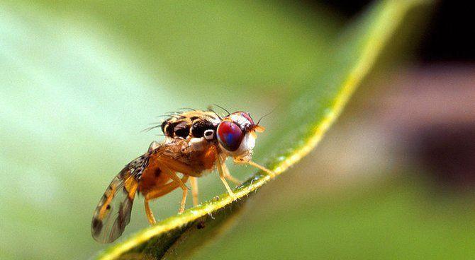 L'araignée à trois pattes et la mouche sans aile (conte de Noël !)