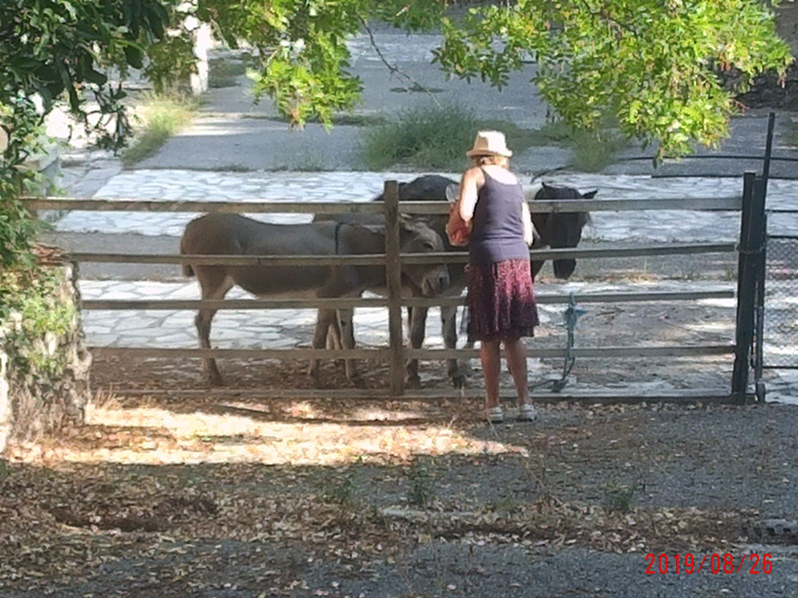 Au retour, le poney et les 2 ânes attendent ma Marie-Madeleine...