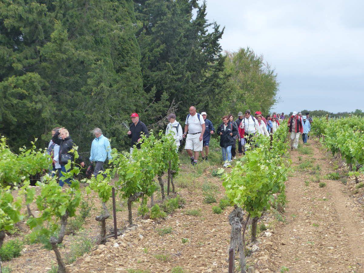 Les marcheurs descendent, de vigne en vigne, vers le Canal.
