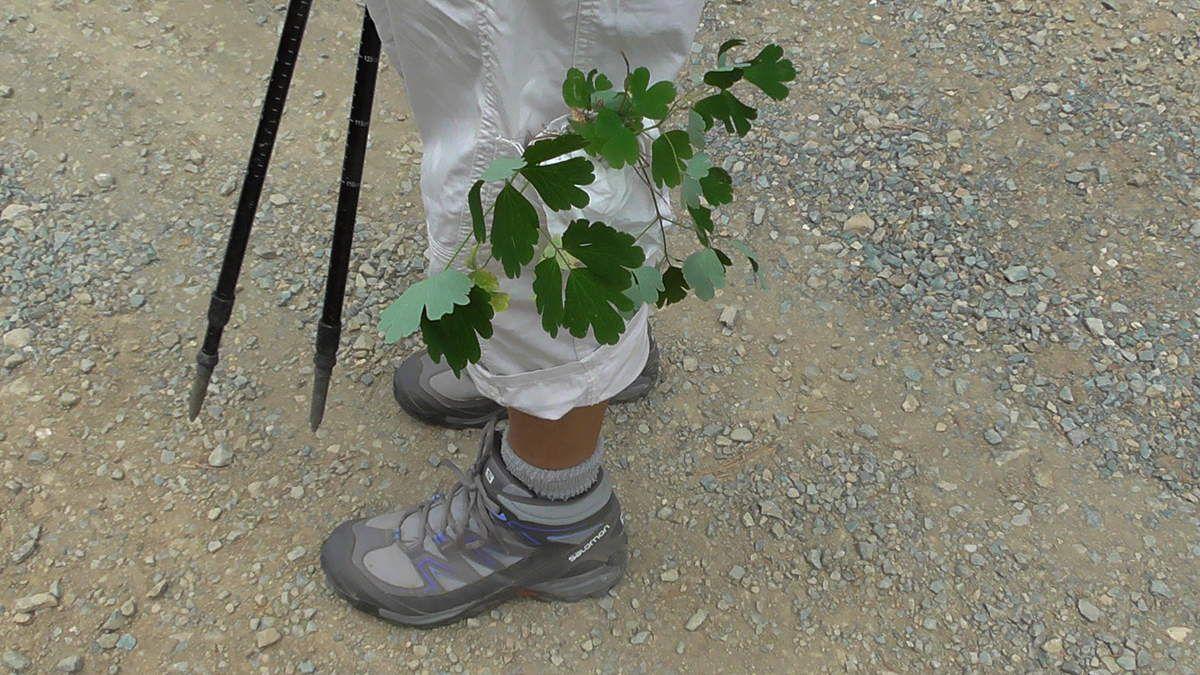 Petite devinette pour clore cette belle journée : à qui appartiennent ces pieds? :-)