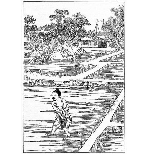 A  226  -   DÉCOUVRONS LE « RIZ GLUANT » DE THAÏLANDE ET DE L'ISAN EN PARTICULIER.