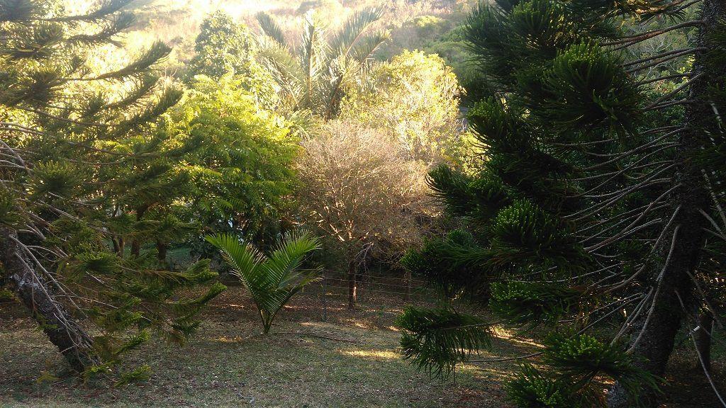 Parc forestier  Nouvelle Calédonie
