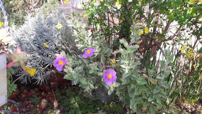 Nos Fleurs du Printemps-1-