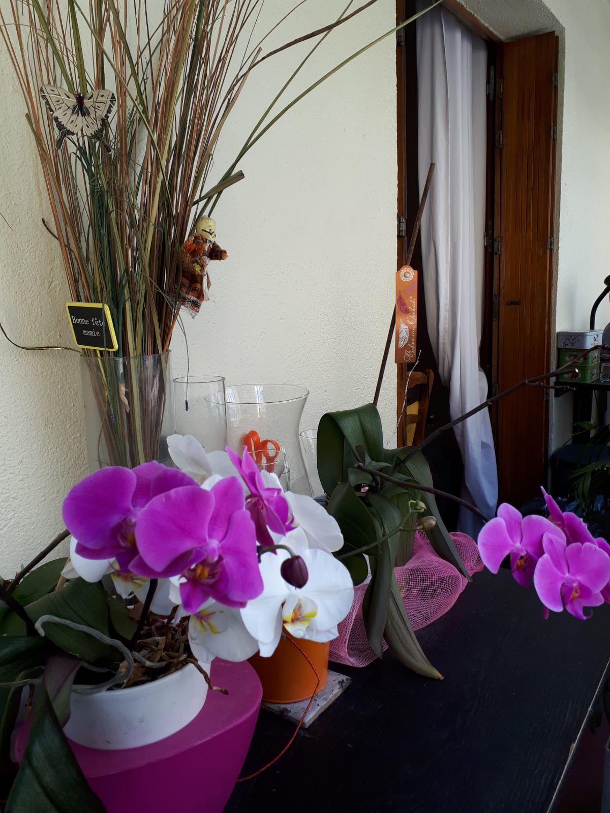 Nos Fleurs du Printemps-2-