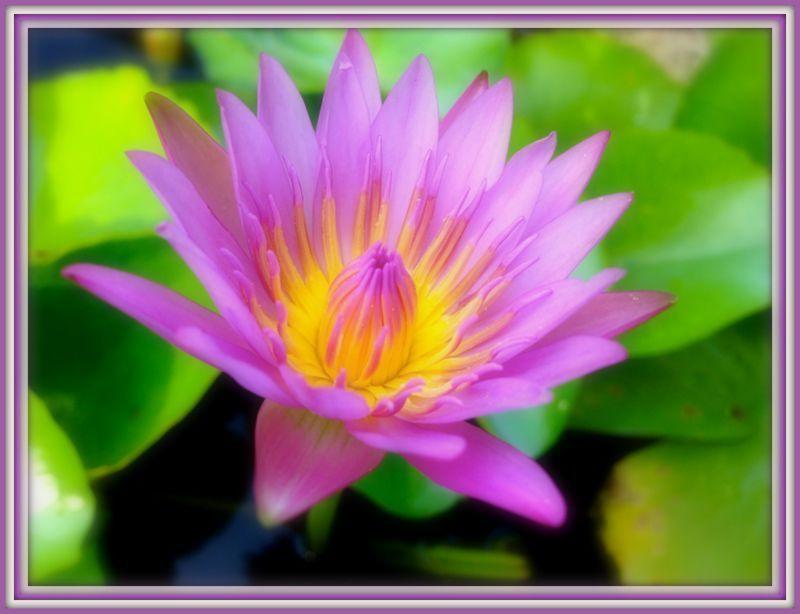 Les couleurs du jardin