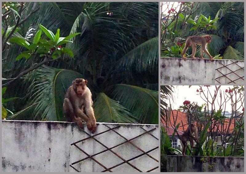 Laissez circuler le primate