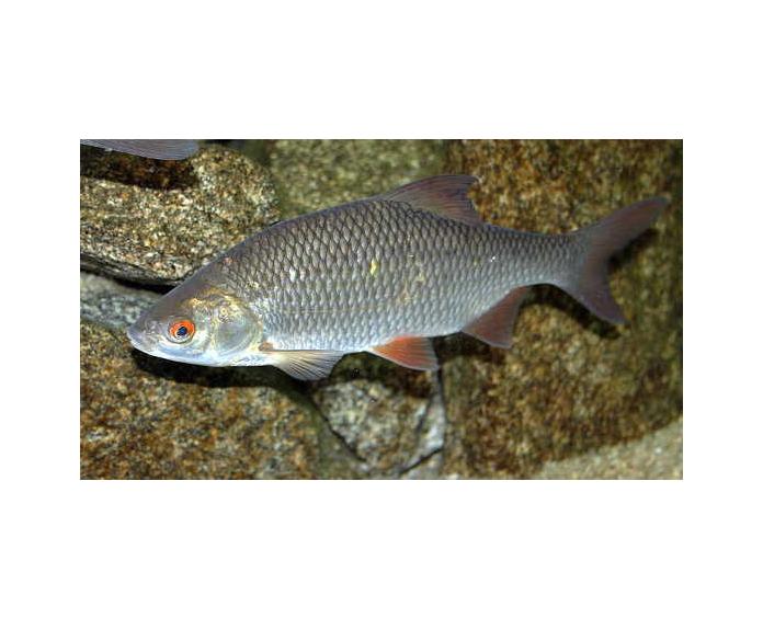 Les fiches poissons