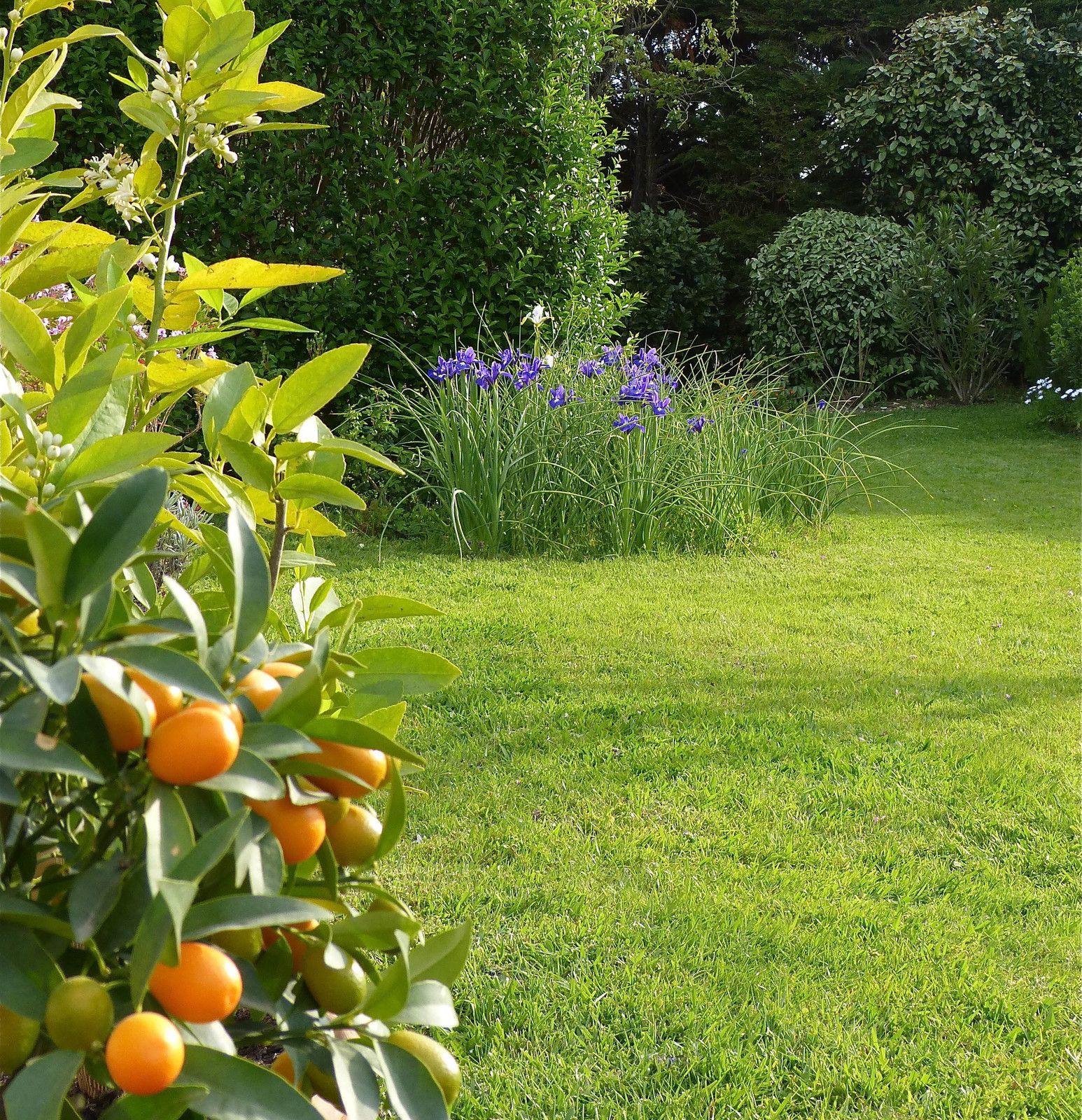 Kumquats confits au sel