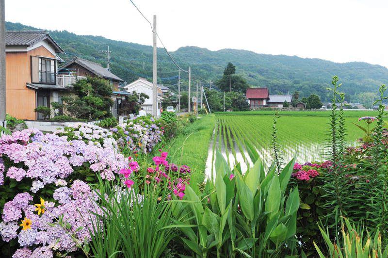 MUSASHI, Kyushu Nord Est