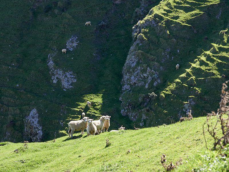 Retour à nos moutons