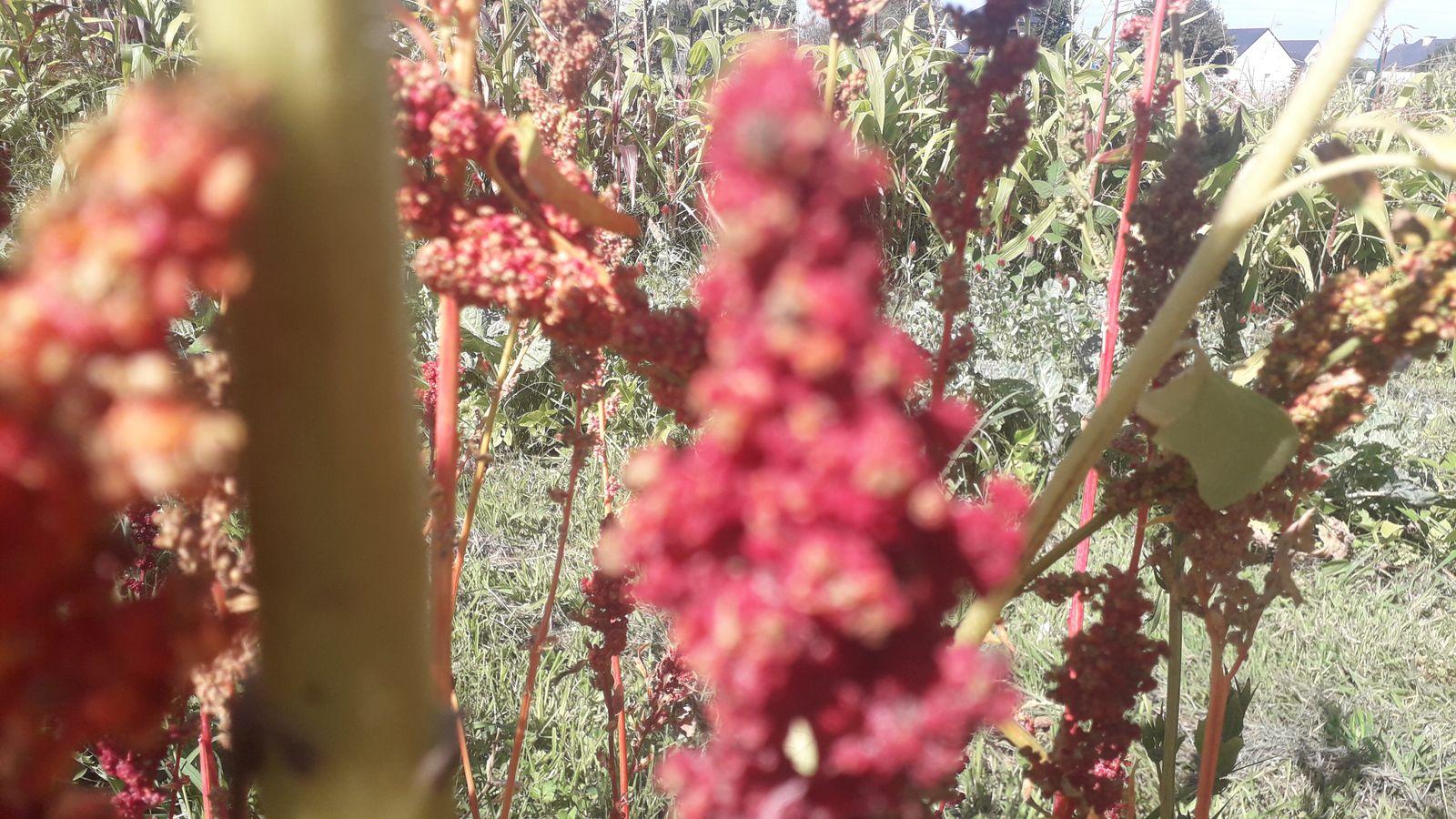 Quinoa City Ligth  !  -brightest-brilliant-rainbow 2020