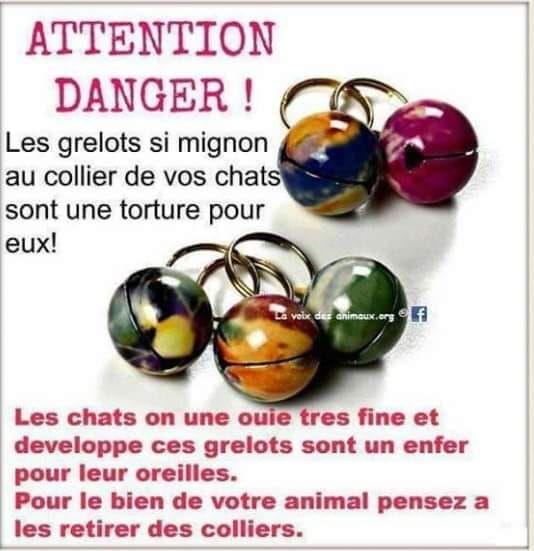 POUR LE BONHEUR DE NOS PETITS CHATS