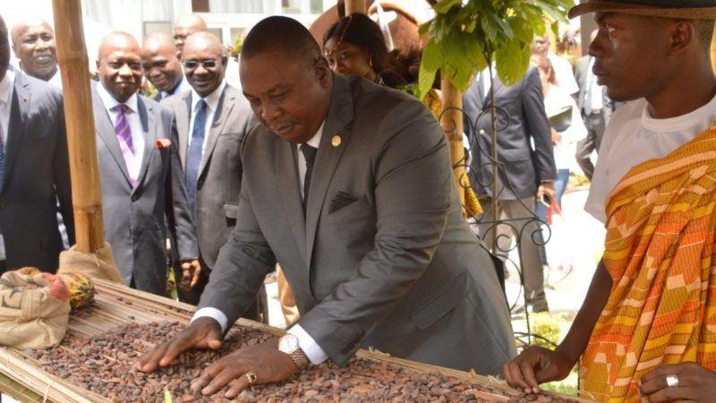 Côte d'Ivoire: Le cacao face aux défis de la transformation et de l'éradicationdu Swollen shoot