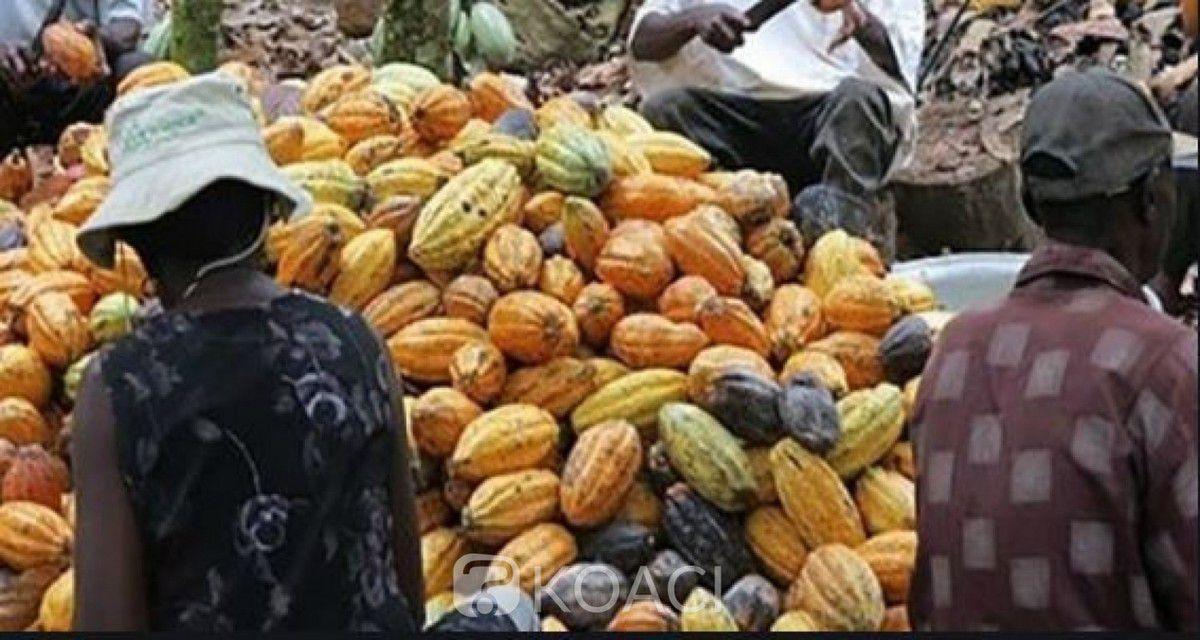 SARA 2019: 14 milliards FCFA pour réussir la culture du cacao sans déforestation