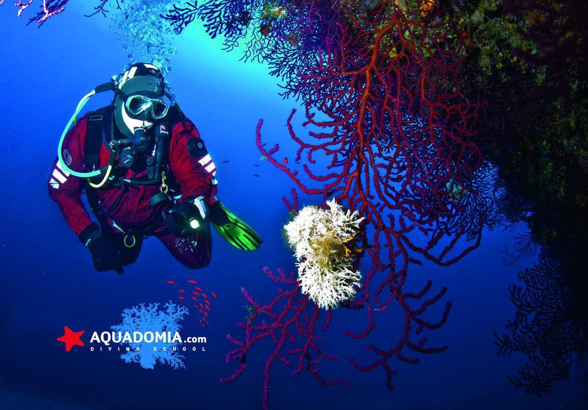 La vie formidable de moniteur de plongée : s'émerveiller à chaque instant !